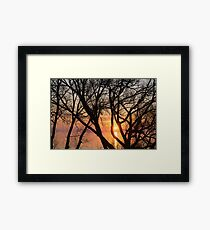 Sunrise Through the Chaos of Tree Branches Framed Print