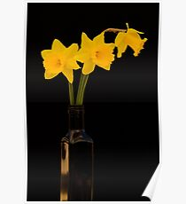 Daffodils 2 Poster