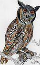 Gevlekte ooruil / Spotted Eagle Owl by Elizabeth Kendall