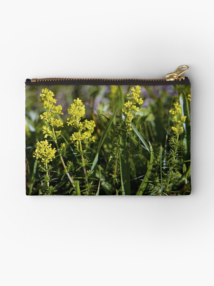 Galium Verum (Lady's Bedstraw), Inishmore, Aran Islands by George Row