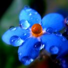 ..orange drop.. by Eugenio