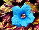 Blue Flower by Jane-in-Colour