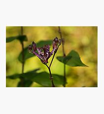 Exotic Tricyrtis Lily Photographic Print