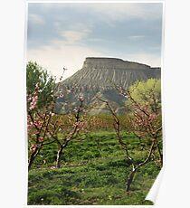 Palisade, Colorado Peach Blossoms Poster