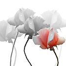 Five Roses by Rosalie Scanlon