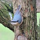 NutHatch by CreativeEm