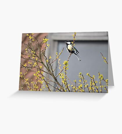 Song of The Great Tit Greeting Card