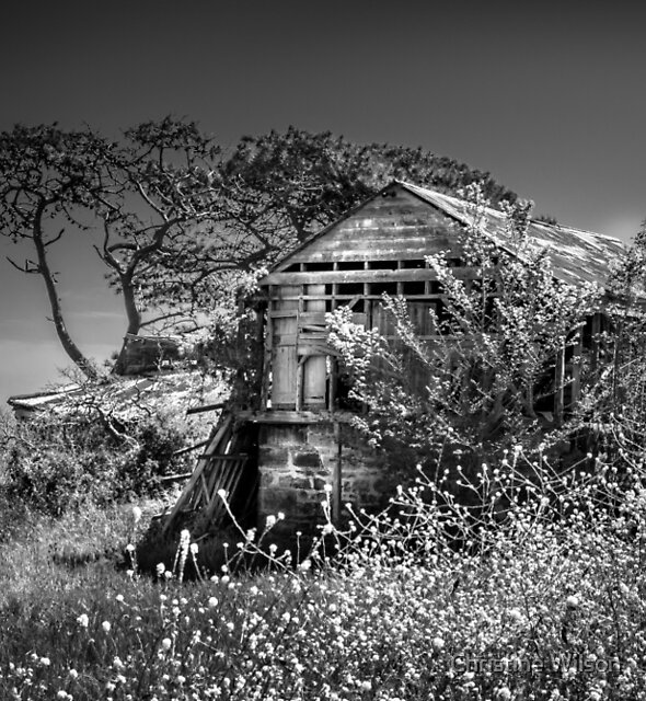 Port Arlington House by Christine Wilson