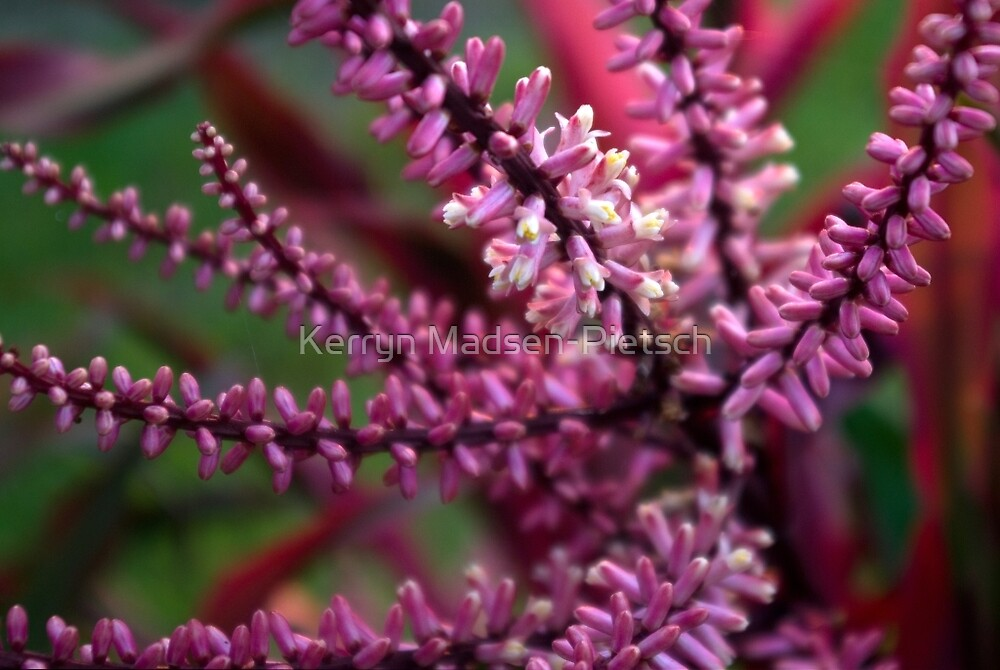 Pink and Cream Clusters by Kerryn Madsen-Pietsch