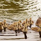 A very busy mum by Joyce Knorz