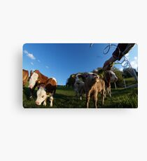 calf in 2 Canvas Print