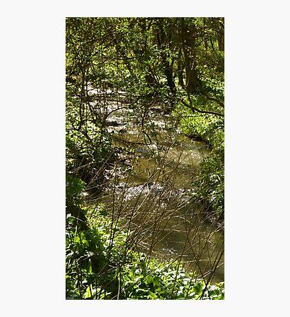 Woodland stream Photographic Print