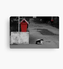 Cat Mail Canvas Print
