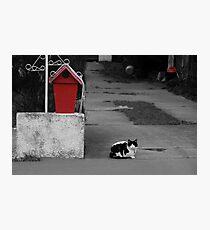 Cat Mail Photographic Print