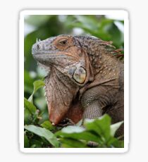 Iguana-Suit of Armour Sticker