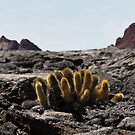 Galapagos Lava Cactus by Catherine Sherman