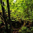 Sunlight in the Forest  by Georgia Mizuleva