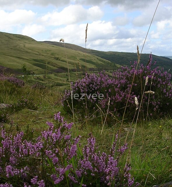 In the Brecon Beacons National Park by lezvee