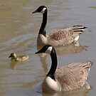 Goose Family by James & Laura Kranefeld
