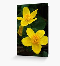 Even sunny while it's raining - Kingcups Greeting Card