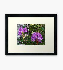 Rhodos Growing Wild In The Woods Framed Print