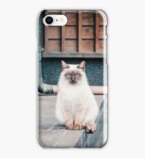 Cat, Aso, Temple iPhone Case/Skin