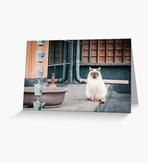 Cat, Aso, Temple Greeting Card