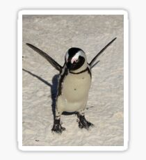 African Penguin Sticker