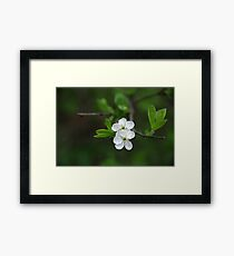 Pure As White Framed Print