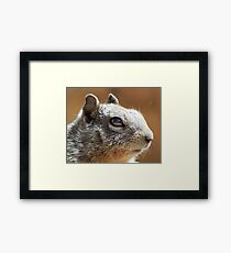 Macro Squirrel Eye Framed Print