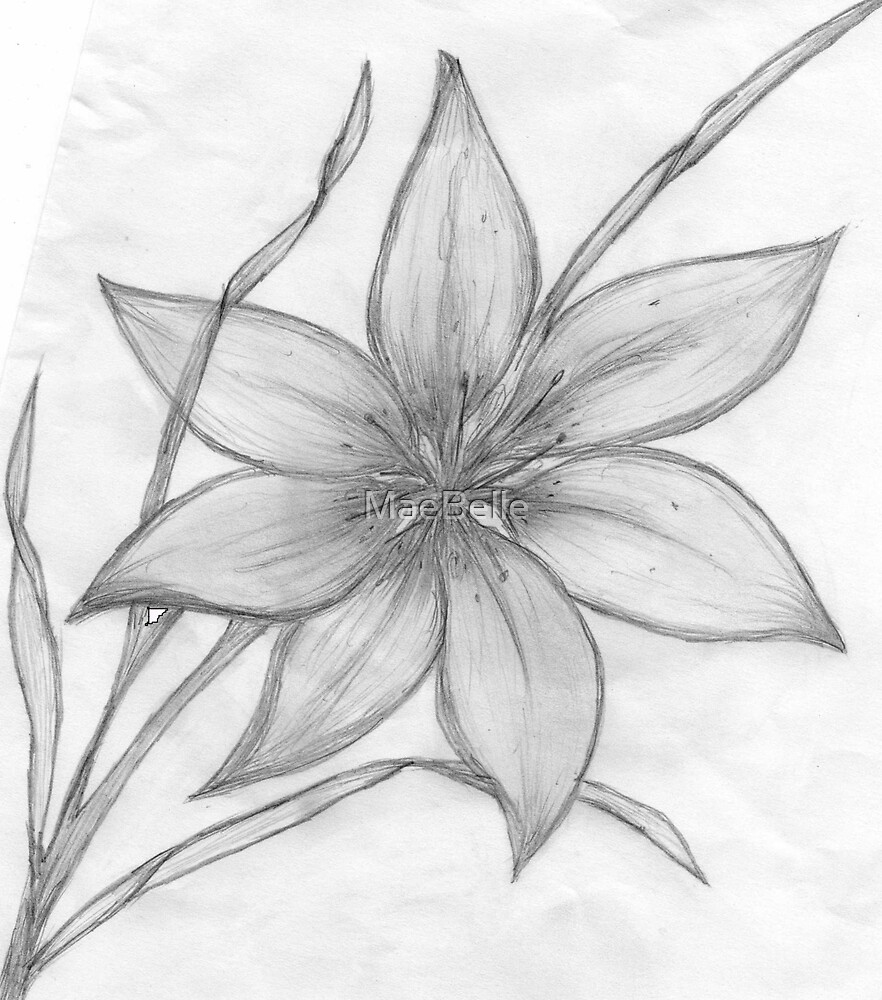 "Easy Drawings Of Flowers In Pencil ""Lily,Penc..."