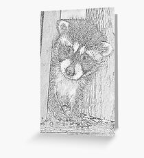 Baby Coon Greeting Card