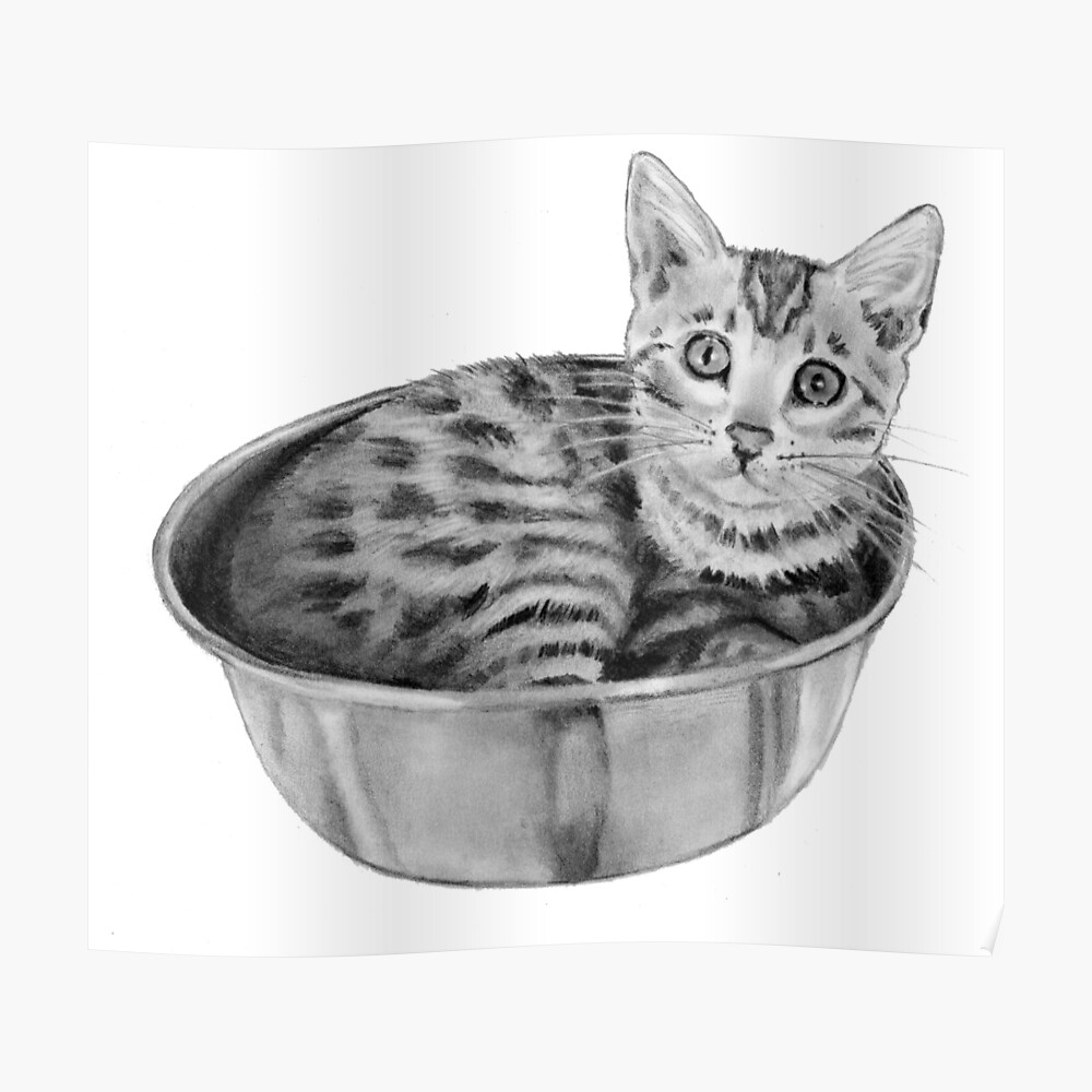 Bengal kitten in a bowl realism pencil drawing poster