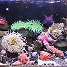 Our Colourful Underwater World by Vicki Spindler (VHS Photography)