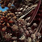 Beneath No Waves, A Fractal Reef by Chris Spain