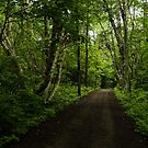 Summer Forest Tranquility - Beautiful Charlevoix, Quebec, Canada by Georgia Mizuleva