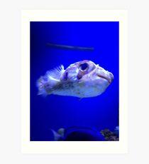 Happy little Puffer Fish Art Print
