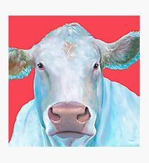 Charolais Cow painting Photographic Print