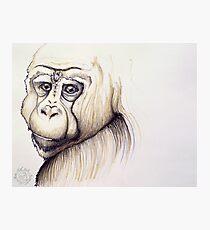 Wise Ape Photographic Print