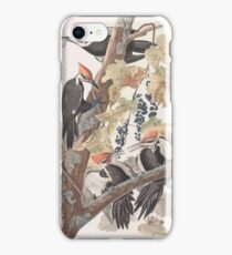 John James Audubon - Pileated Woodpecker iPhone Case/Skin