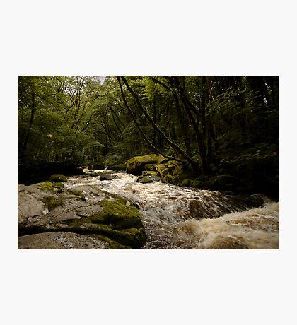 Golitha Falls Photographic Print