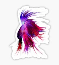 Betta Splendens ;Siamese fighting Fish. Sticker
