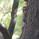 Monkey in a Tree by Hermien Pellissier