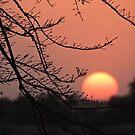 Sunset in Sawarda by Hermien Pellissier
