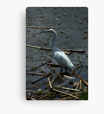 Great Heron in a Lake Canvas Print