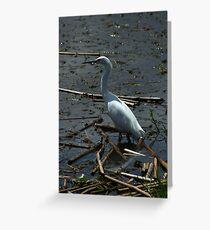 Great Heron in a Lake Greeting Card