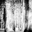 the woods... by Wieslaw Jan Syposz