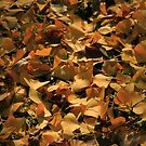 Ginkgo Biloba Leaves in Autumn by HoremWeb