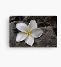 Delicate Induration Canvas Print