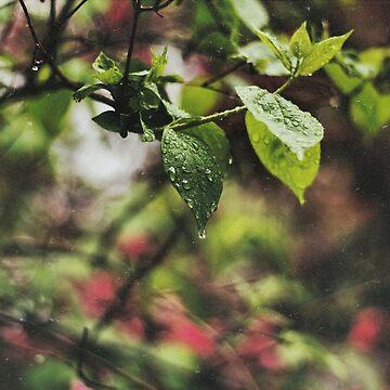 Spring Rain  by christinevanfon